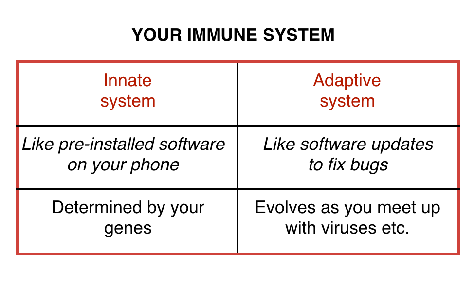 Strong immune system chart explaining innate and adaptive systems